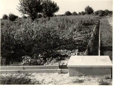Canali di irrigazione