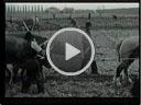 Video: La bufera
