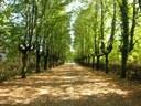 Reggio Emilia, Parco dell'ex manicomio San Lazzaro