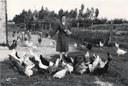 Moglie di un assegnatario a Portomaggiore, Foto Giacometti, ca. 1955, raccolta EDP-ERSA