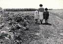 Assegnatari di fondi agricoli, 1958, raccolta EDP-ERSA