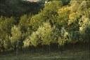 Boschetto di latifoglie nel parco di Villa Ghigi a Bologna, fotografia di Delfino Insolera, ca. 1975, raccolta Delfino Insolera
