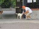 Anche i cani di Pompei vorrebbero partecipare al concorso!