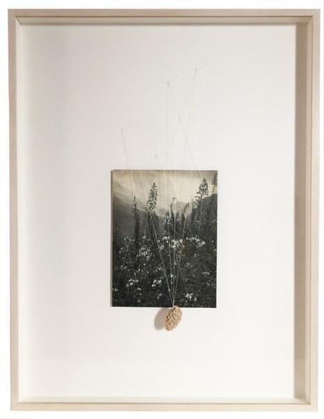 Claudia Losi, Windy Grass, 2017, tecnica mista quadro