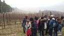 Viti-cultura: le vie dell'uva a Valsamoggia tra arte, storia ed economia 4/5