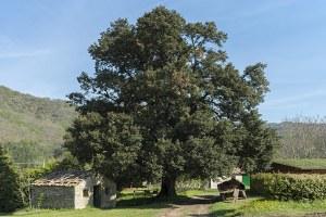 Alberi monumentali: dalla Regione 200mila euro per la loro gestione